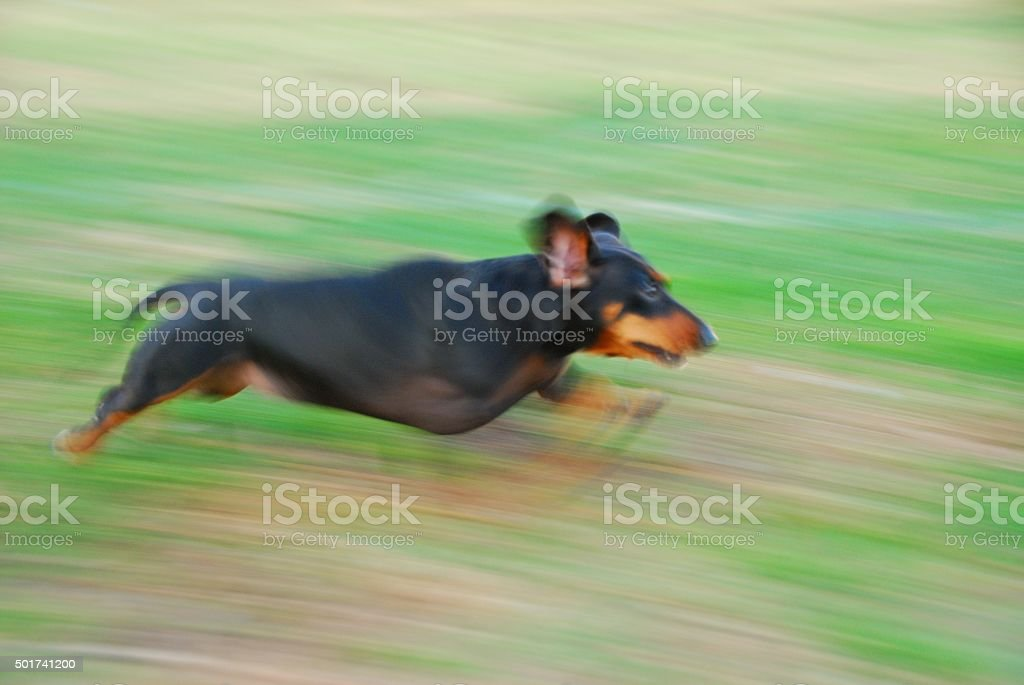 Dog Running in Blurred Motion stock photo