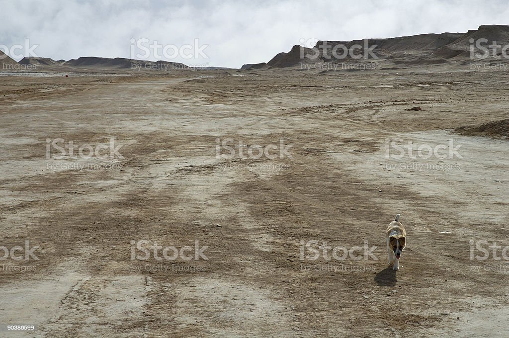 Dog running in desert royalty-free stock photo