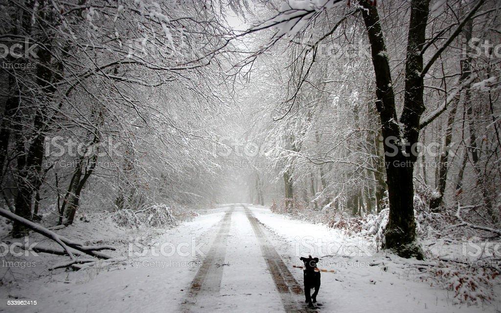 Cão correr na floresta NevadasComment foto de stock royalty-free