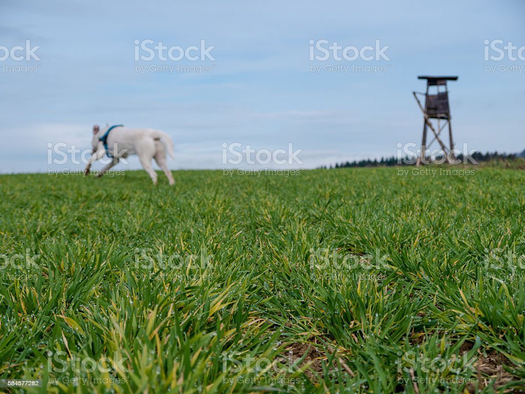 Dog running over field stock photo