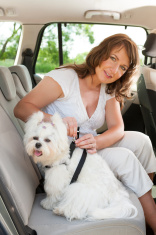 Questions About Pets You Must Know the Answers To