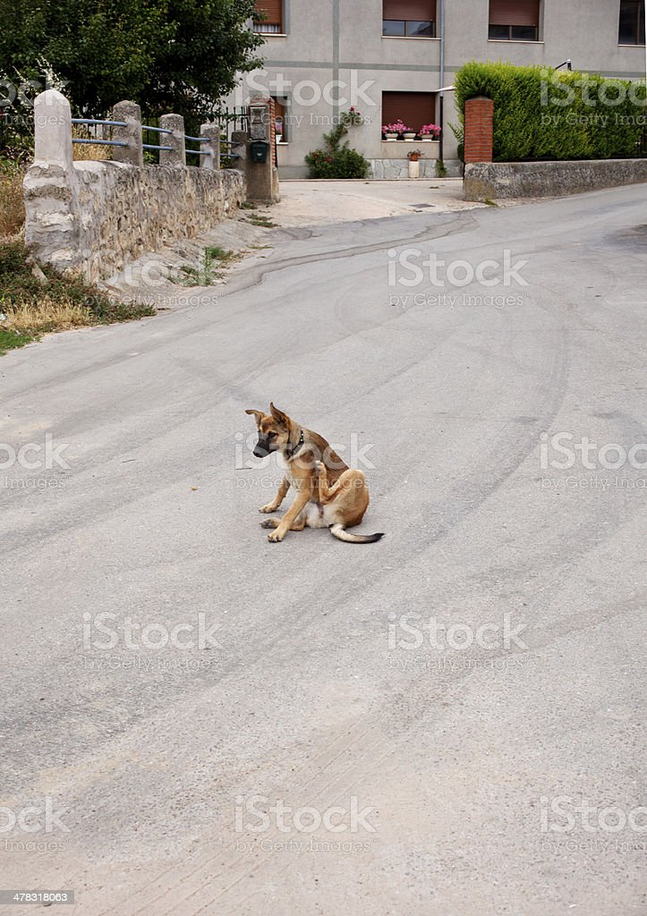Dog scratching in the street royalty-free stock photo
