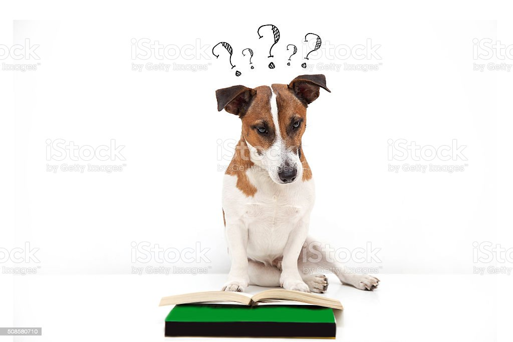 Dog Searching for answers stock photo