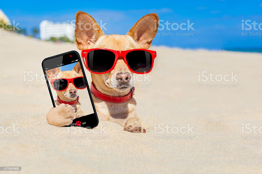 dog  selfie buried in sand stock photo