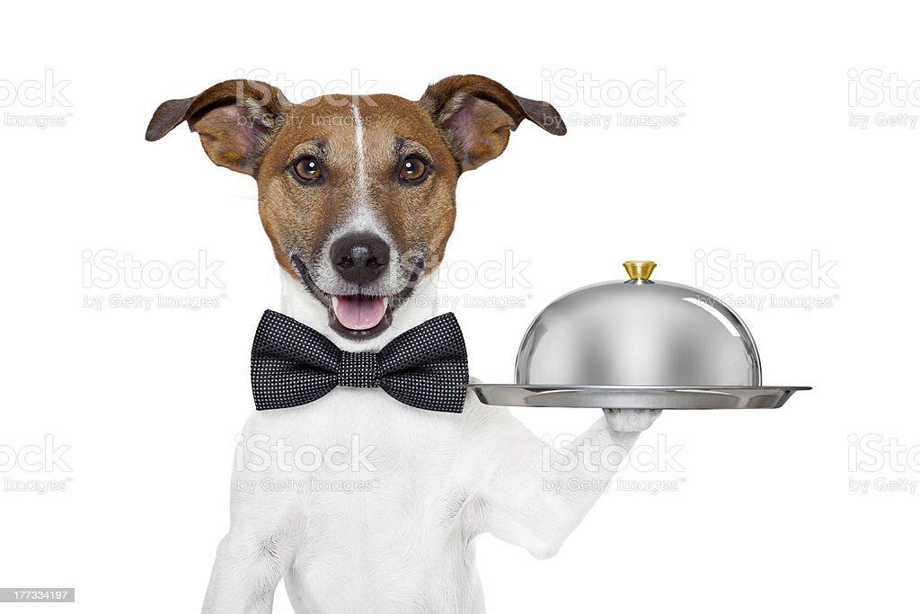 dog service tray stock photo