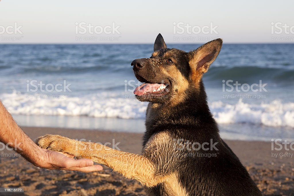Dog Shaking Hands With Man On The Beach, Mediterranean Sea stock photo