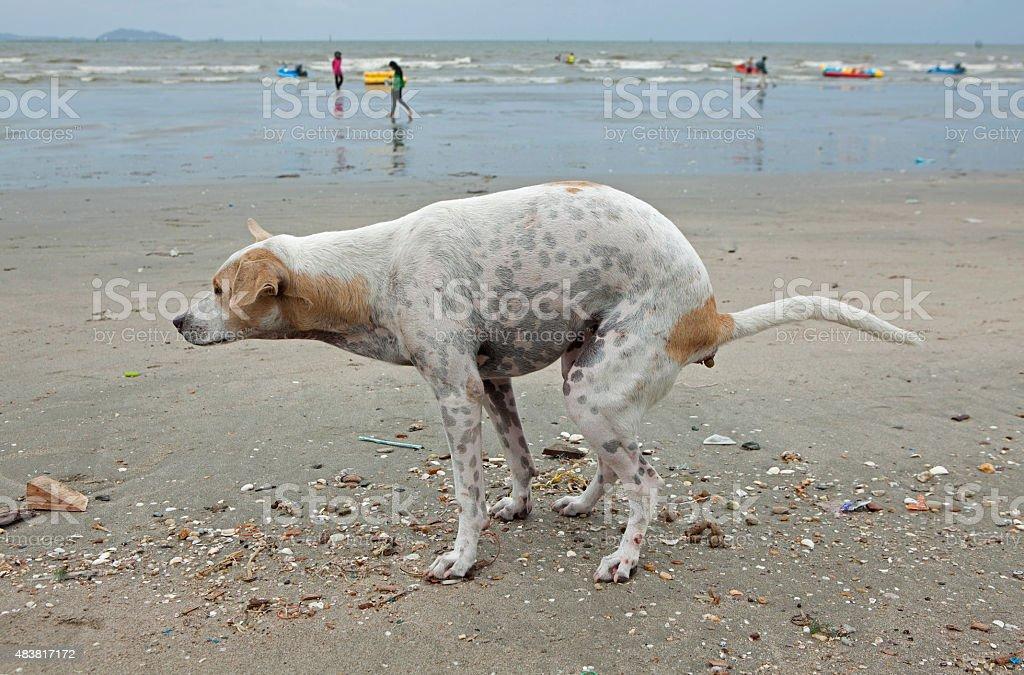 Dog shit on the beach stock photo