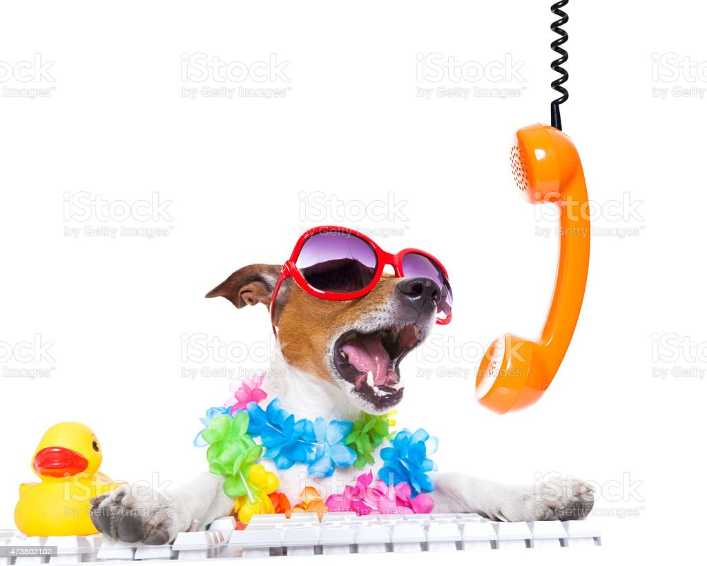 dog shouting on the phone stock photo