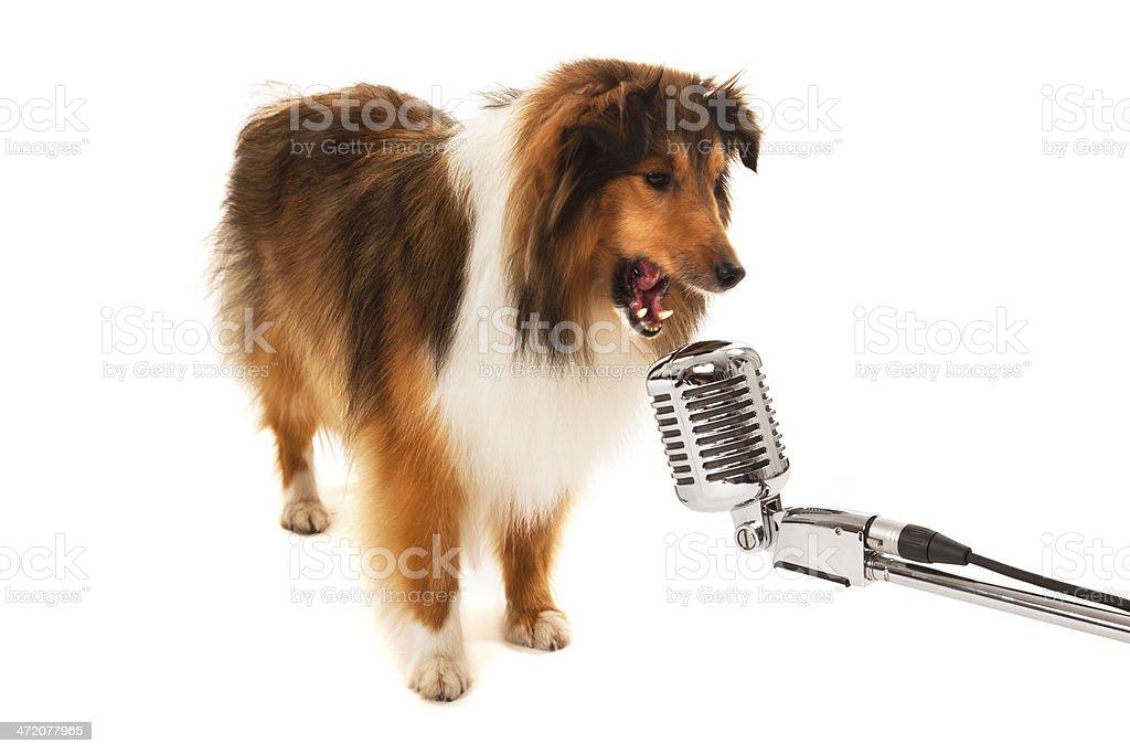 Dog singing stock photo