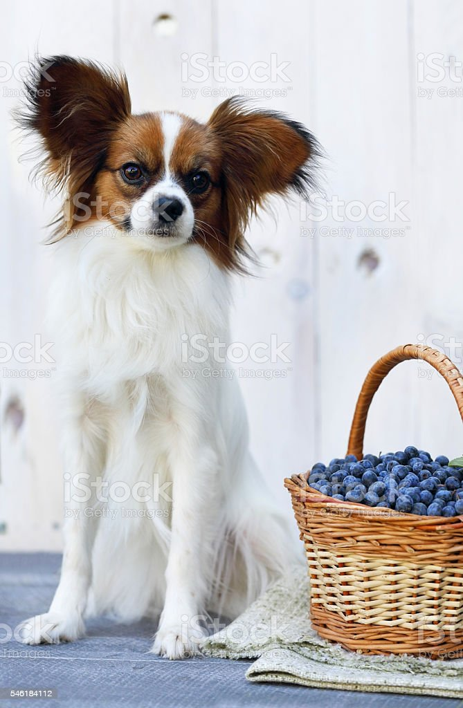 dog sits near a basket stock photo