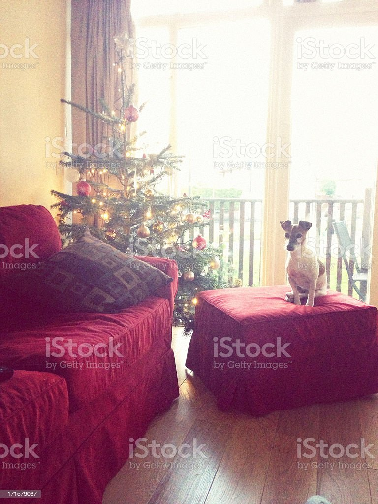 Dog sits next to Christmas Tree in a living room stock photo