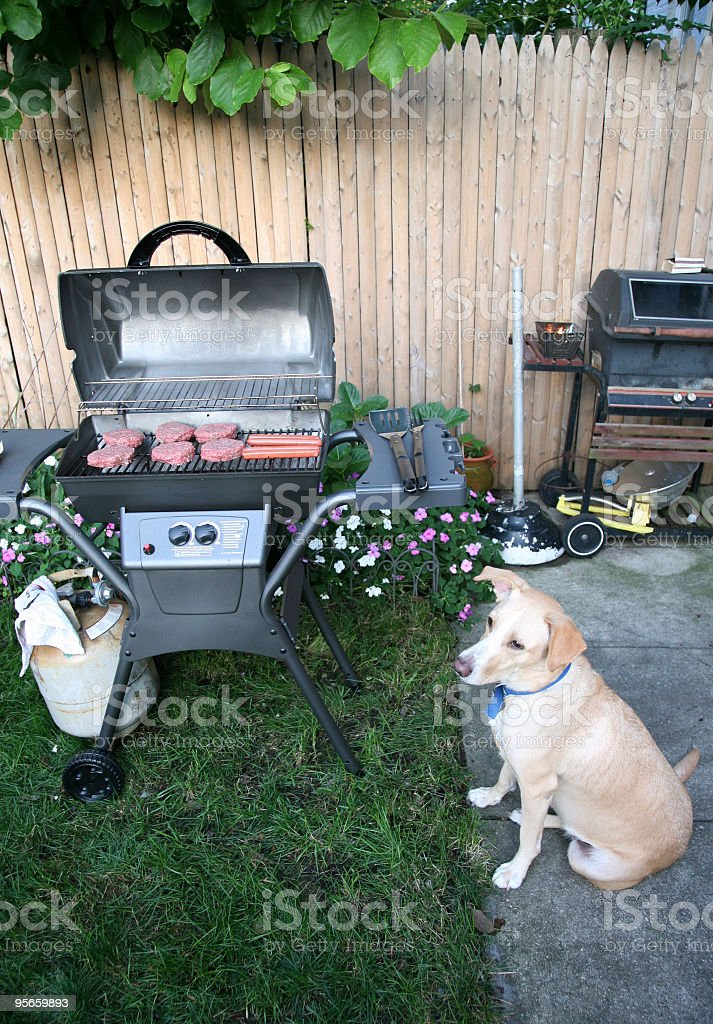 Dog Sitting at Barbecue stock photo