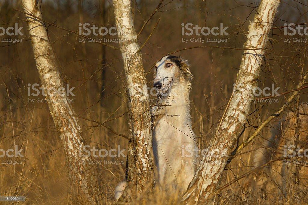 Dog sitting in ambush stock photo