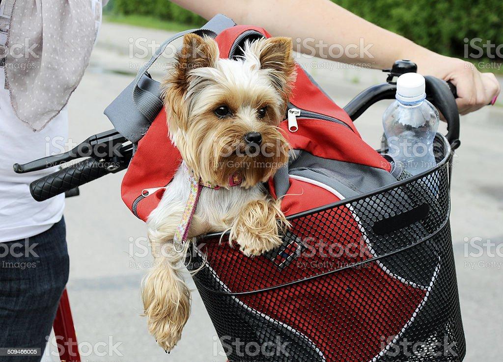 Dog sitting in basket stock photo
