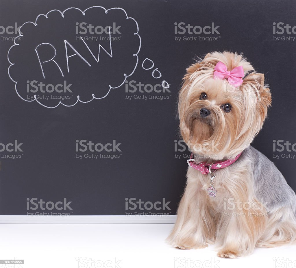 Dog sitting in front of a chalkboard royalty-free stock photo