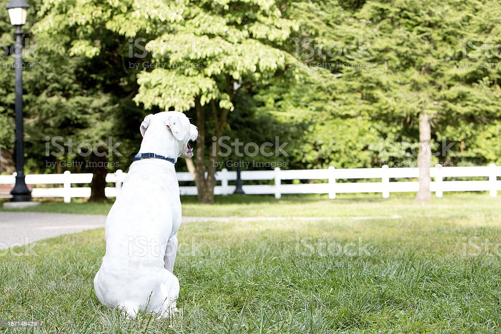 Dog sitting in the park royalty-free stock photo