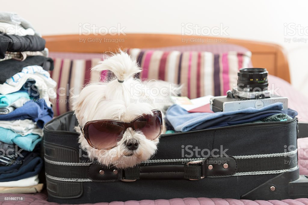 Dog sitting in the suitcase stock photo