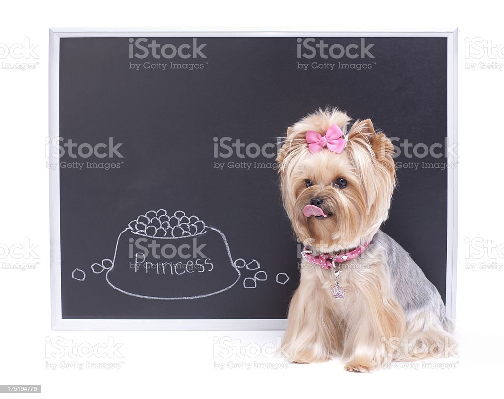 Dog Sitting next to Chalk Board royalty-free stock photo