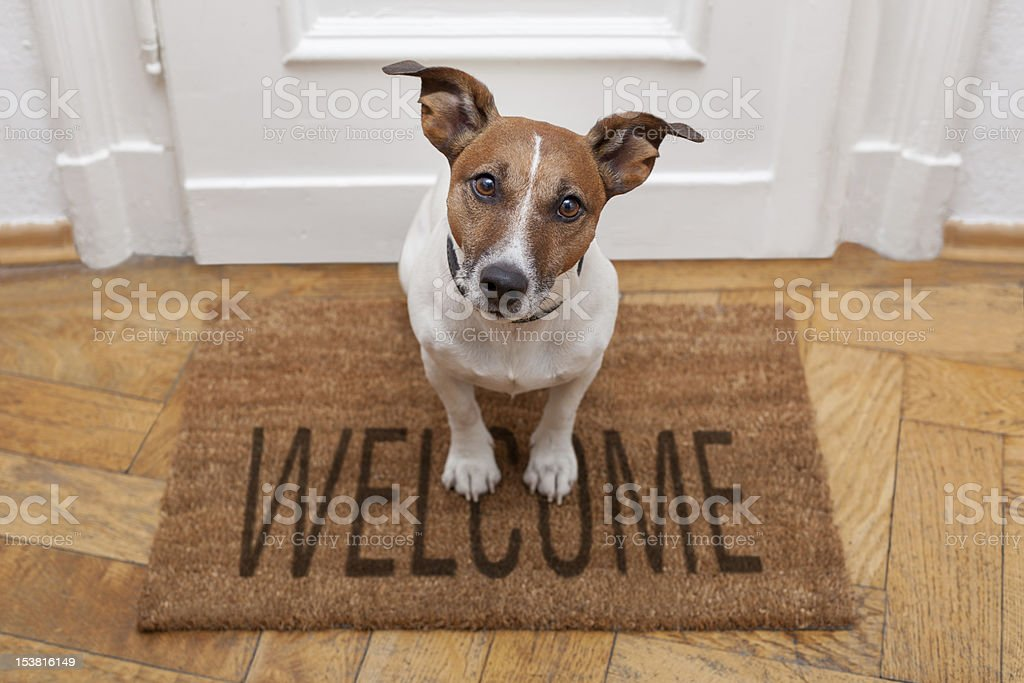 Dog sitting on a welcome mat at front door stock photo