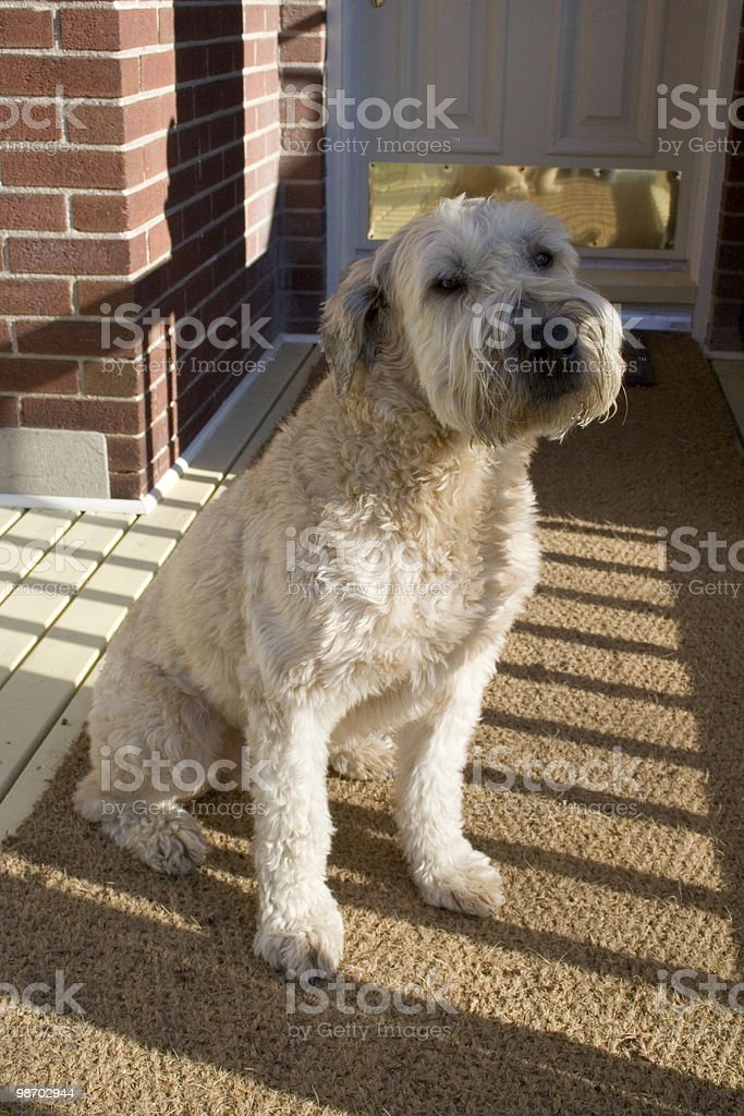 Dog sitting on front porch stock photo
