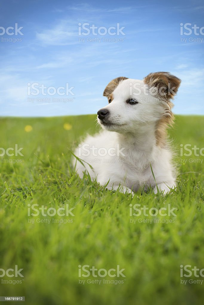 Dog sitting on grass royalty-free stock photo