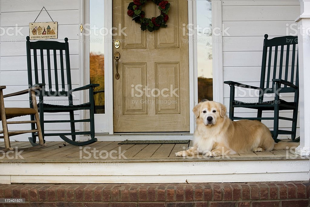 Dog sitting on porch with rocking chairs near the front door stock photo