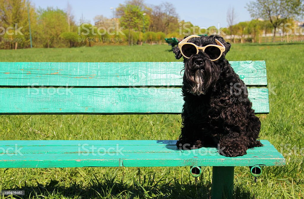 Dog sitting with sunglasses stock photo