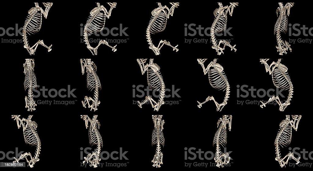 Dog skeleton royalty-free stock photo