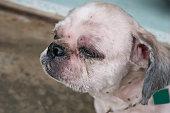 Dog skin after hair cut , inject kill ticks,