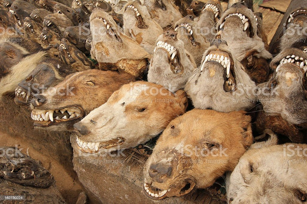 Dog Skull at the Voodoo Fetish Market, Togo, West Africa stock photo