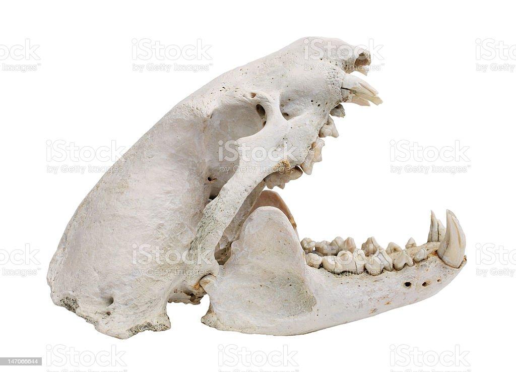 dog skull cutout stock photo