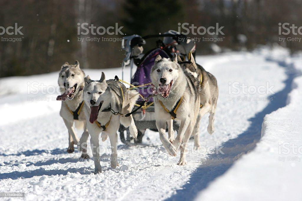Dog sled royalty-free stock photo