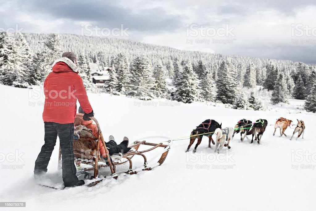 Dog sledding in Norway stock photo