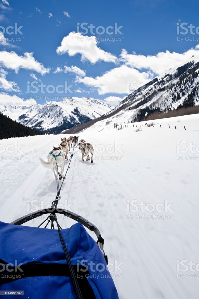 Dog sledding in winter royalty-free stock photo