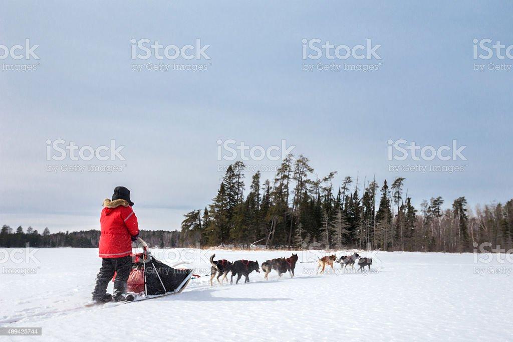 Dog sledding in winter wilderness stock photo