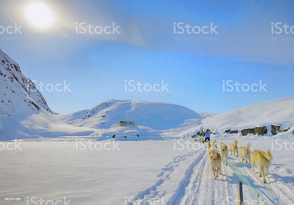 Dog sledding on a wintry Landscape stock photo