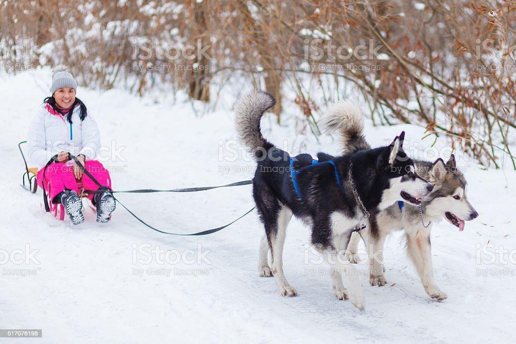 dog sledding, woman stock photo