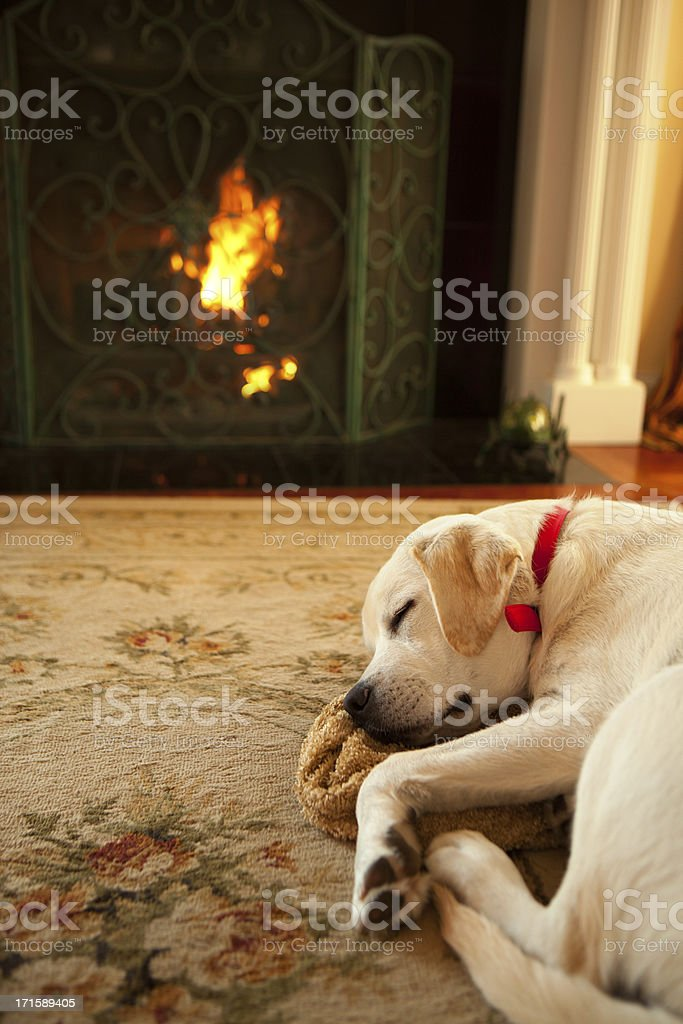 Dog sleeping in front of a fireplace royalty-free stock photo