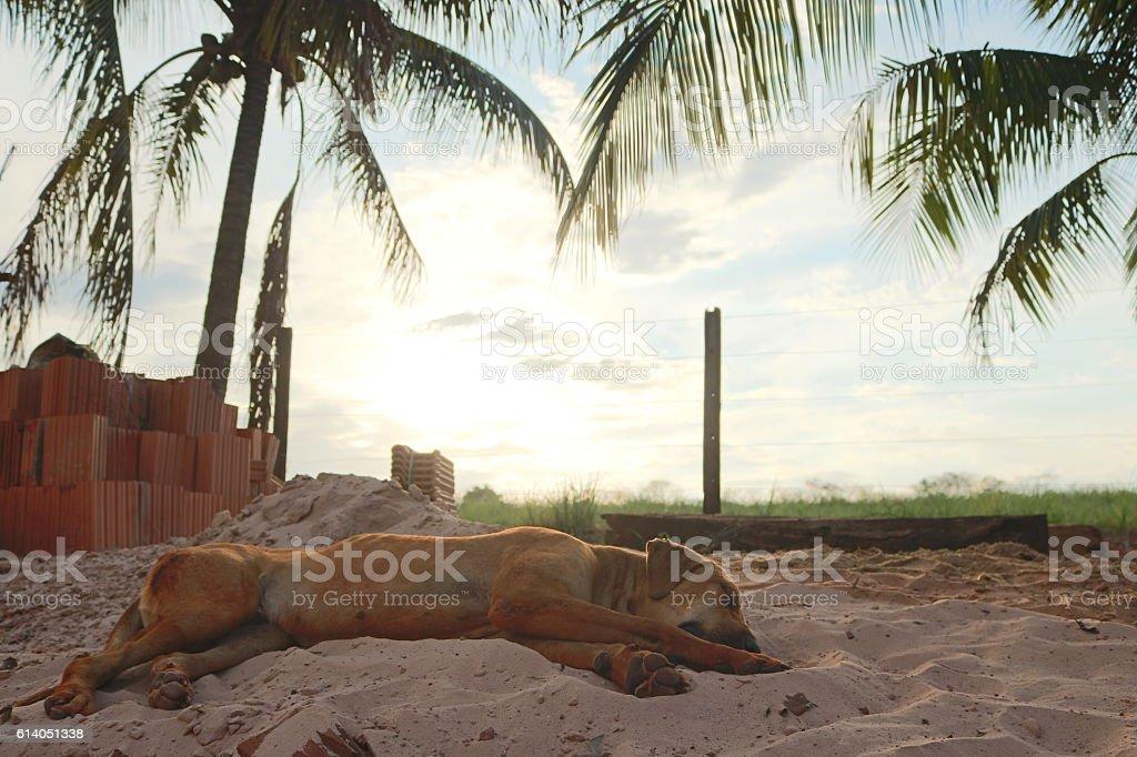 Dog sleeping on sand at the sun stock photo