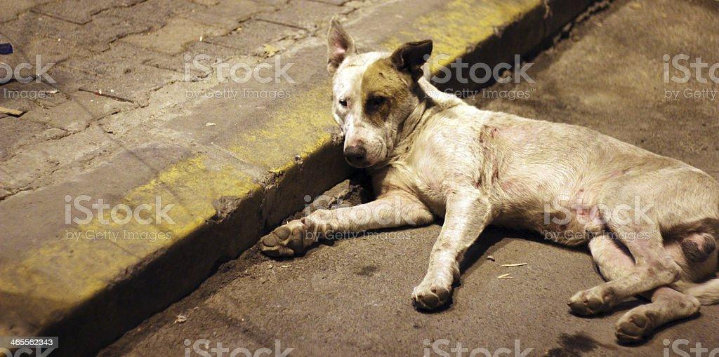 Dog Sleeping On Sidewalk royalty-free stock photo