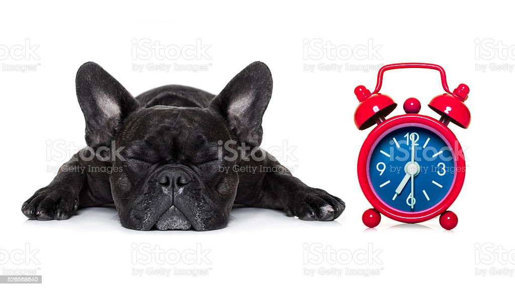 dog sleeping stock photo