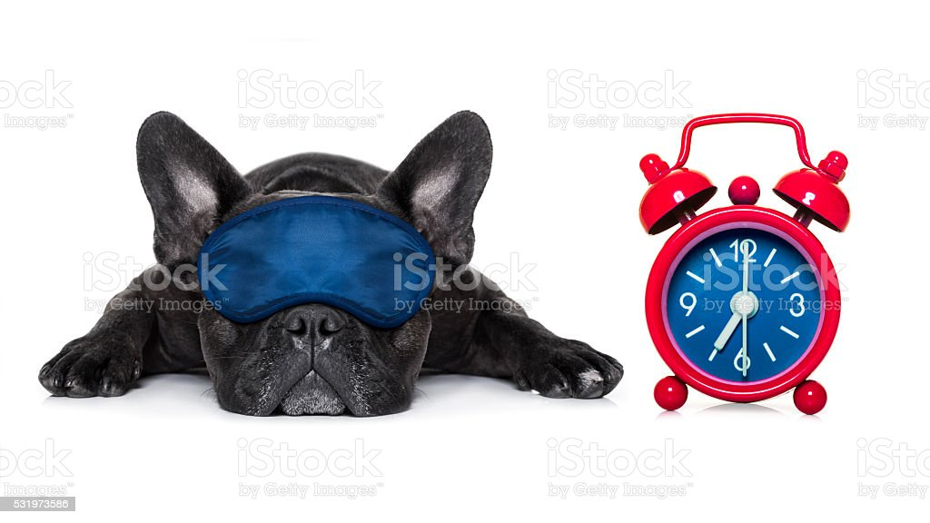 dog sleeping royalty-free stock photo