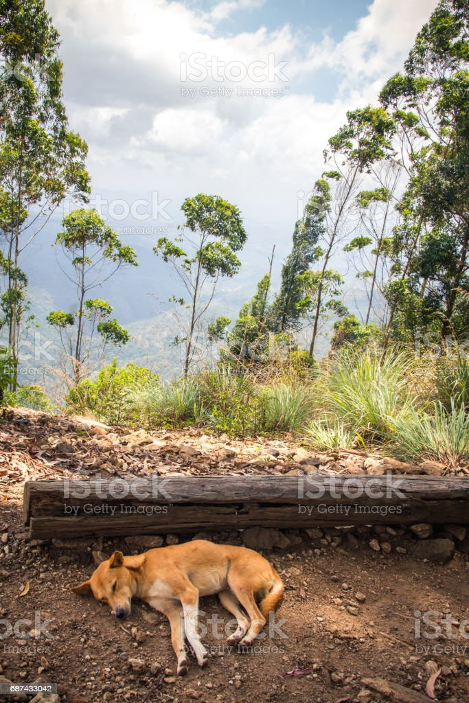 A dog sleeps in the shade at the top of the mountain known as Ella Rock, just outside Ella in Sri Lanka. stock photo