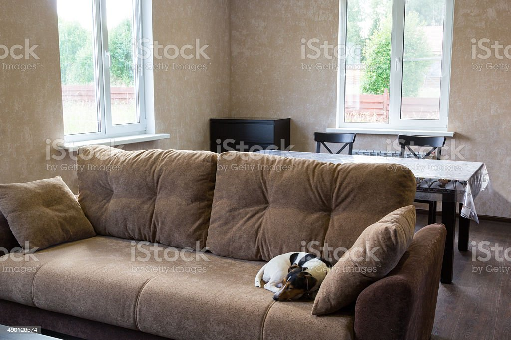 dog sleeps on couch in living room of country house stock photo