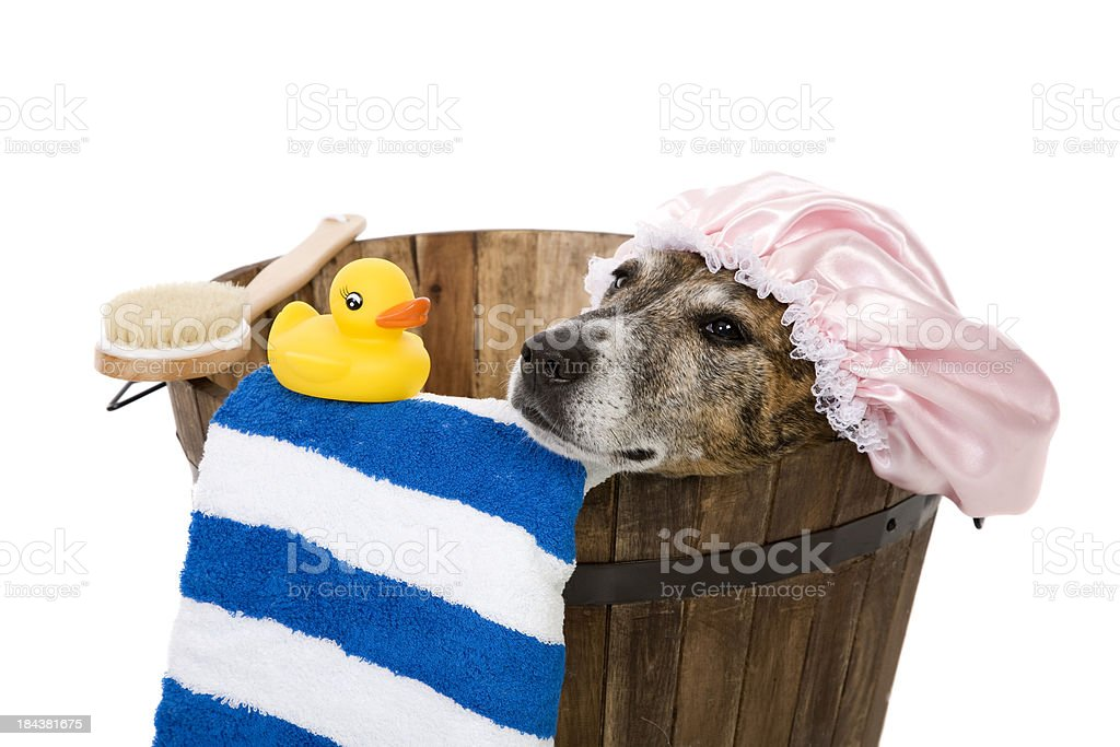 Dog Soaking In The Tub royalty-free stock photo