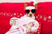 dog spa wellness christmas holidays