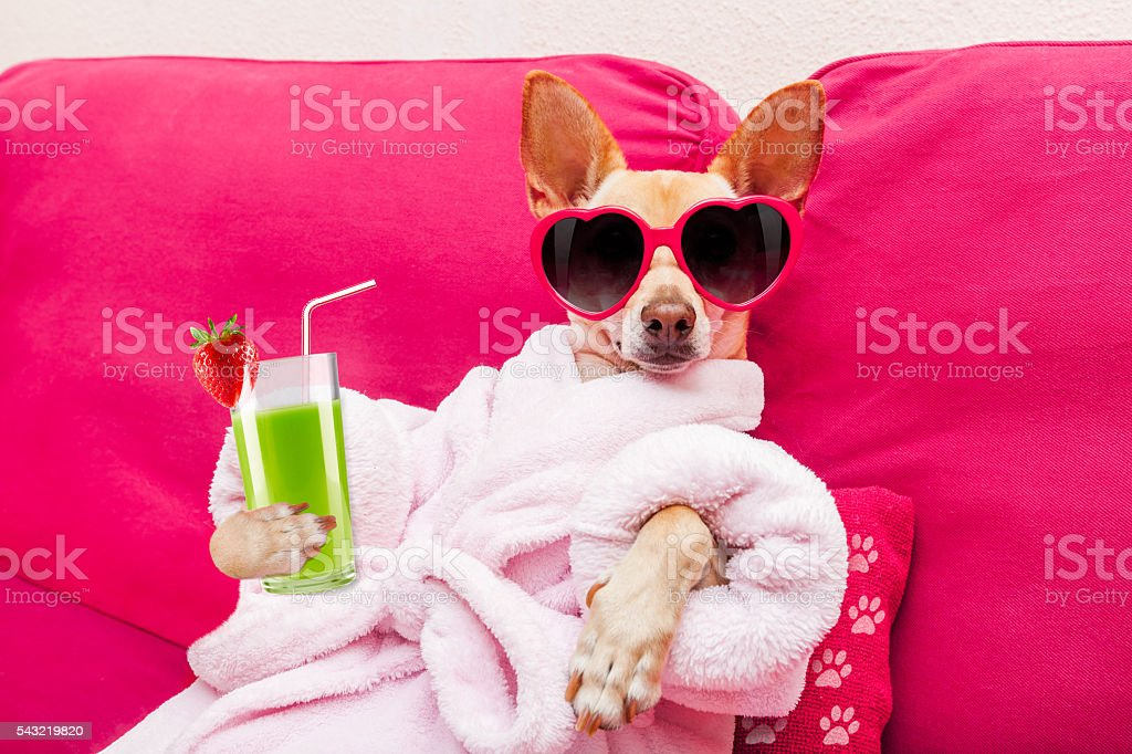 dog spa wellness stock photo