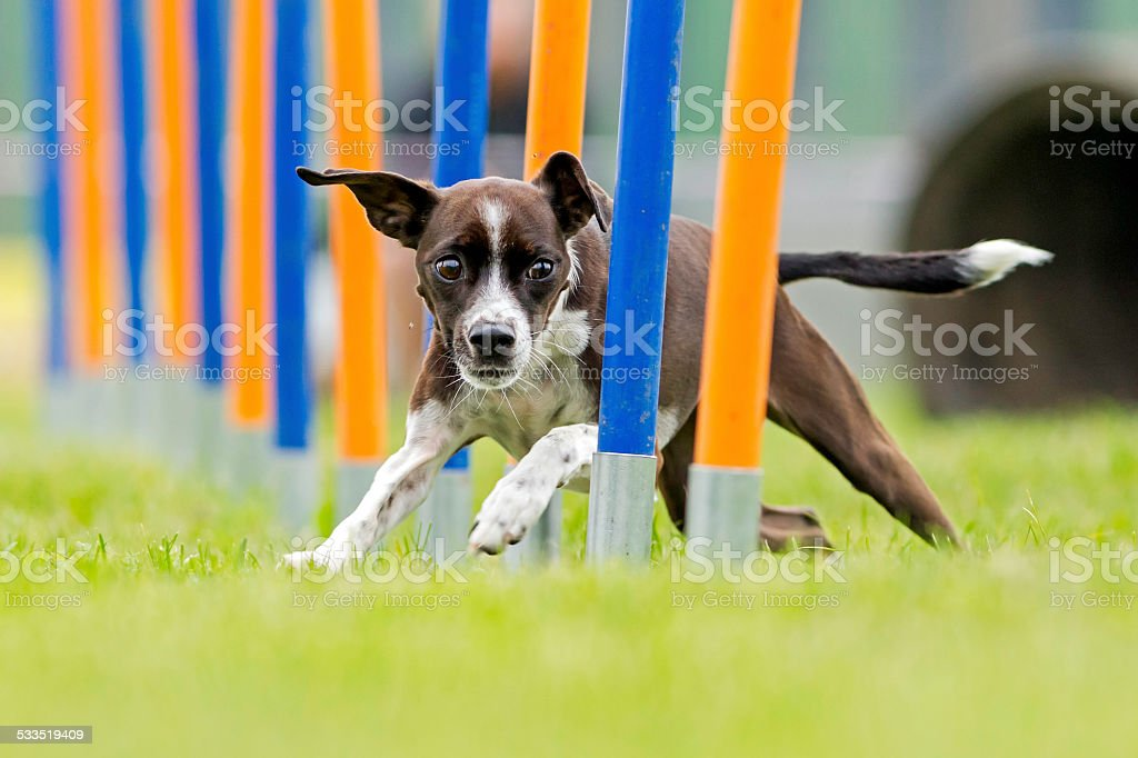 Dog sport stock photo