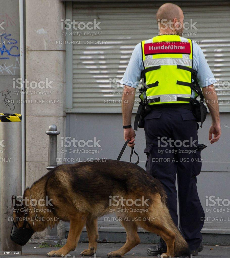 Dog squad stock photo