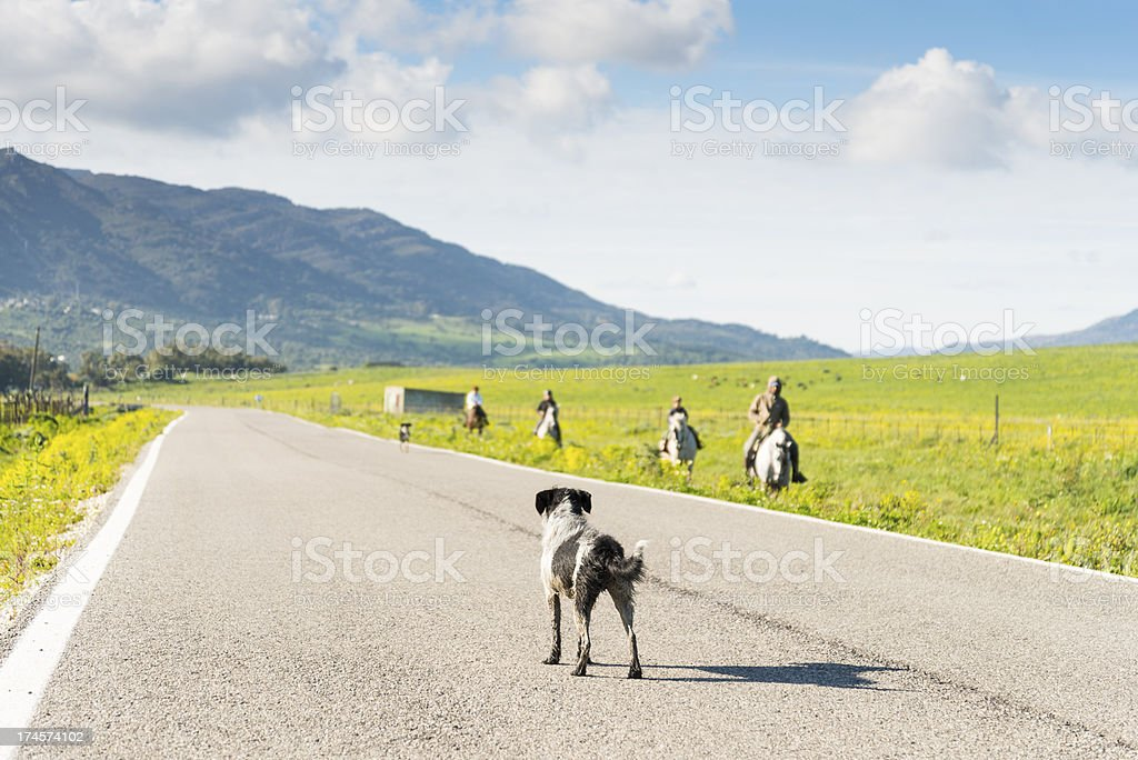 dog standing in road royalty-free stock photo
